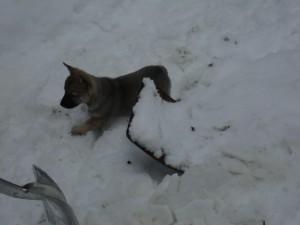 Chaim i snön